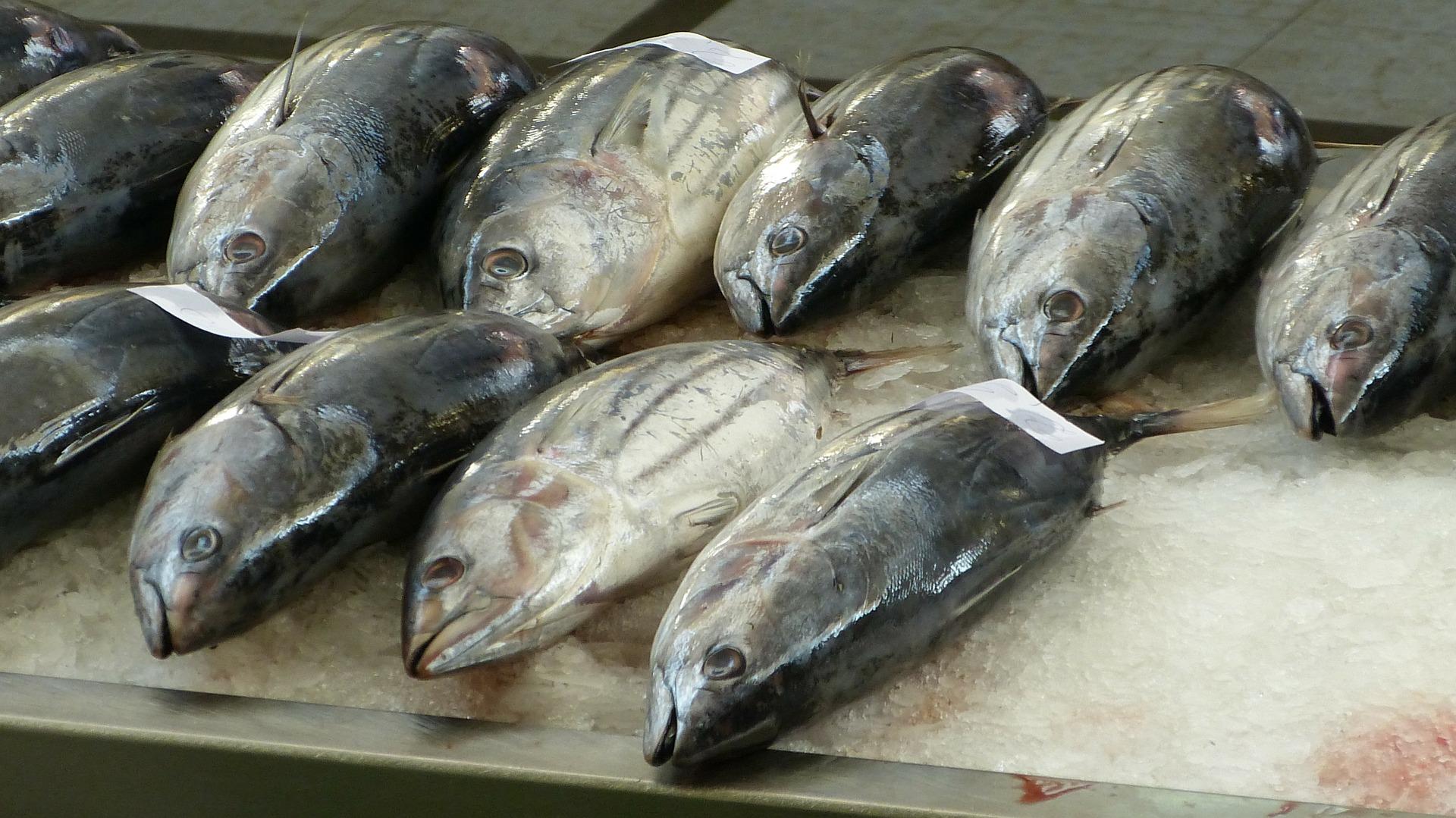 Ricetta tonno rosso al forno – Come cucinare il tonno